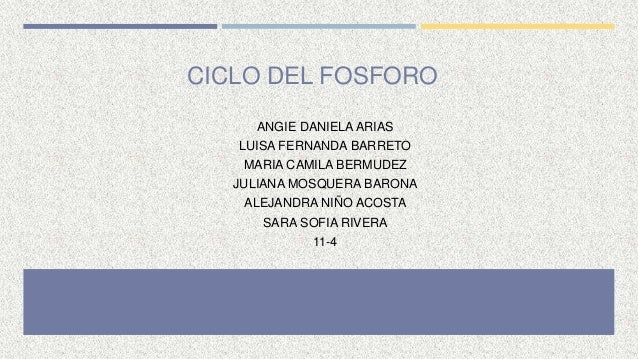 CICLO DEL FOSFORO ANGIE DANIELA ARIAS LUISA FERNANDA BARRETO MARIA CAMILA BERMUDEZ JULIANA MOSQUERA BARONA ALEJANDRA NIÑO ...