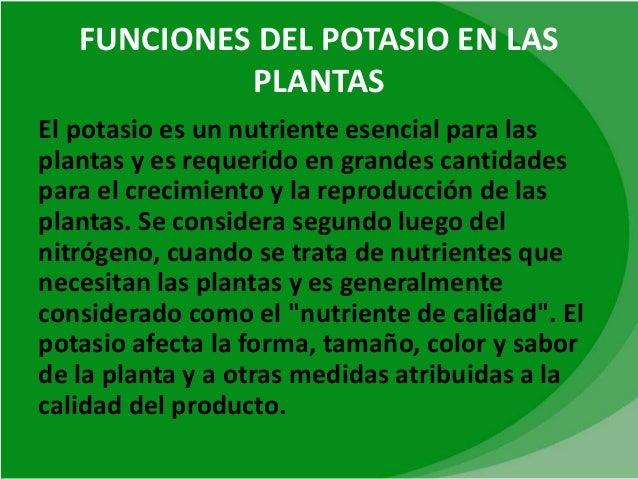 Fosforoy potasio for Funcion de las plantas ornamentales