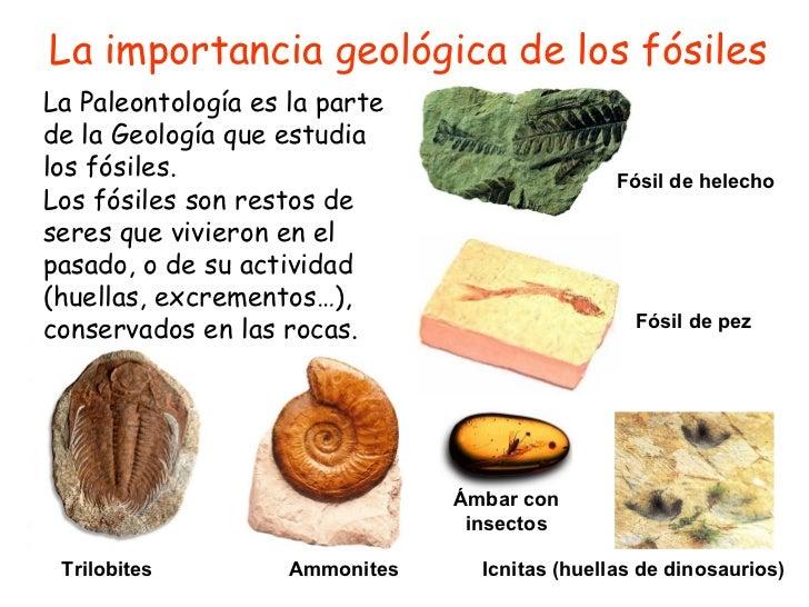La importancia geológica de los fósiles La Paleontología es la parte de la Geología que estudia los fósiles. Los fósiles s...