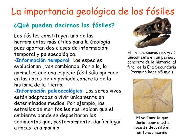La importancia geol gica de los f siles for Que es una oficina y su importancia