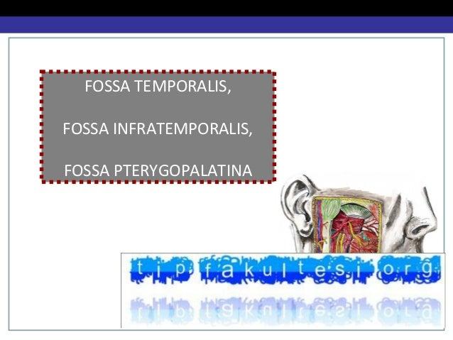 FOSSA TEMPORALIS, FOSSA INFRATEMPORALIS, FOSSA PTERYGOPALATINA Dr. Senem Özdemir
