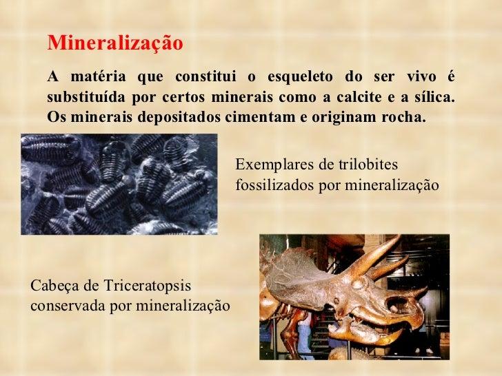 Mineralização A matéria que constitui o esqueleto do ser vivo é substituída por certos minerais como a calcite e a sílica....