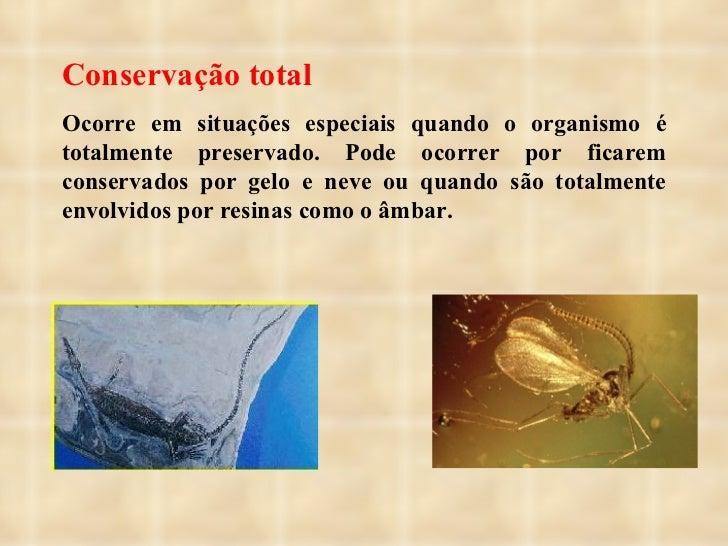 Conservação total Ocorre em situações especiais quando o organismo é totalmente preservado. Pode ocorrer por ficarem conse...