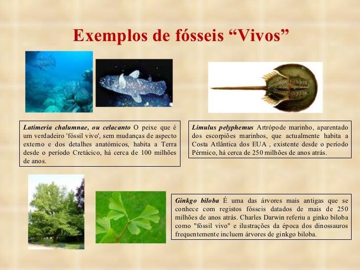 """Exemplos de fósseis """"Vivos"""" Latimeria chalumnae, ou celacanto  O peixe que é um verdadeiro 'fóssil vivo', sem mudanças de ..."""