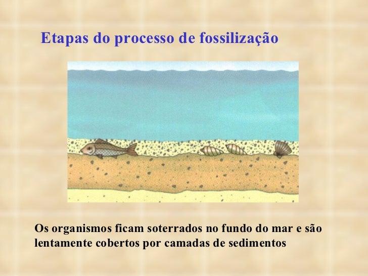 Etapas do processo de fossilização Os organismos ficam soterrados no fundo do mar e são lentamente cobertos por camadas de...
