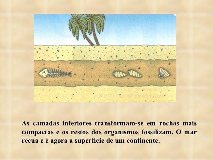 As camadas inferiores transformam-se em rochas mais compactas e os restos dos organismos fossilizam. O mar recua e é agora...