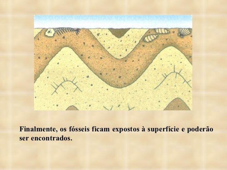 Finalmente, os fósseis ficam expostos à superfície e poderão ser encontrados.