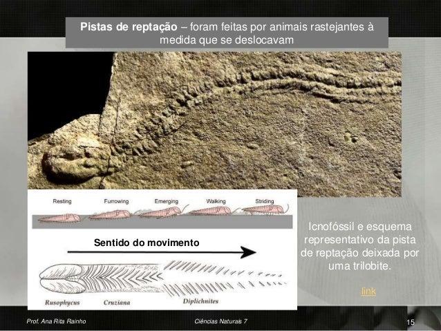 Pistas de reptação – foram feitas por animais rastejantes à medida que se deslocavam Prof. Ana Rita Rainho 15Ciências Natu...