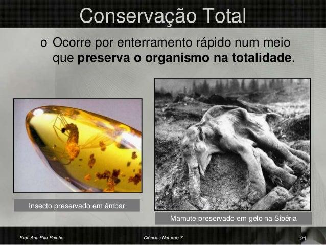 Conservação Total o Ocorre por enterramento rápido num meio que preserva o organismo na totalidade. Insecto preservado em ...
