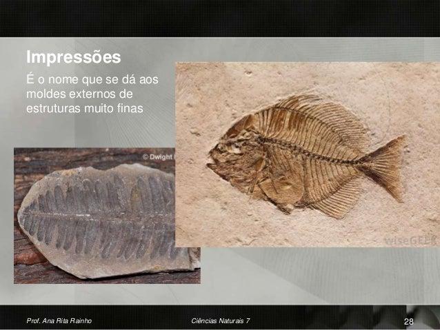 Impressões É o nome que se dá aos moldes externos de estruturas muito finas Prof. Ana Rita Rainho Ciências Naturais 7 28