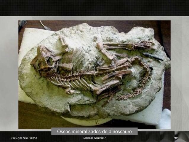 Ossos mineralizados de dinossauro Prof. Ana Rita Rainho 32Ciências Naturais 7