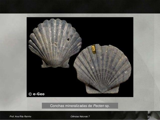 Conchas mineralizadas de Pecten sp. Prof. Ana Rita Rainho 33Ciências Naturais 7