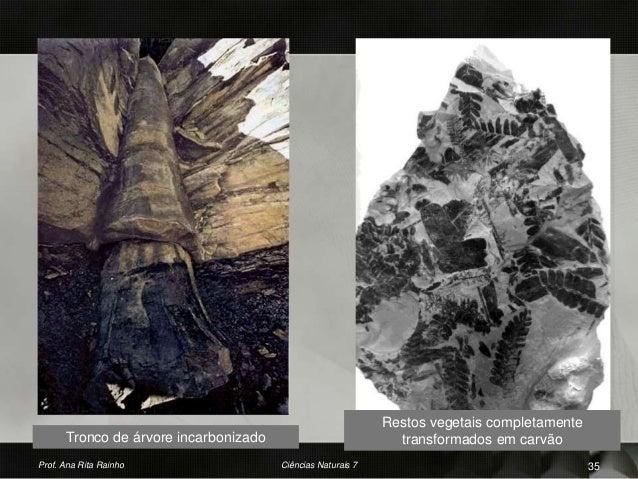 Tronco de árvore incarbonizado Restos vegetais completamente transformados em carvão Prof. Ana Rita Rainho 35Ciências Natu...
