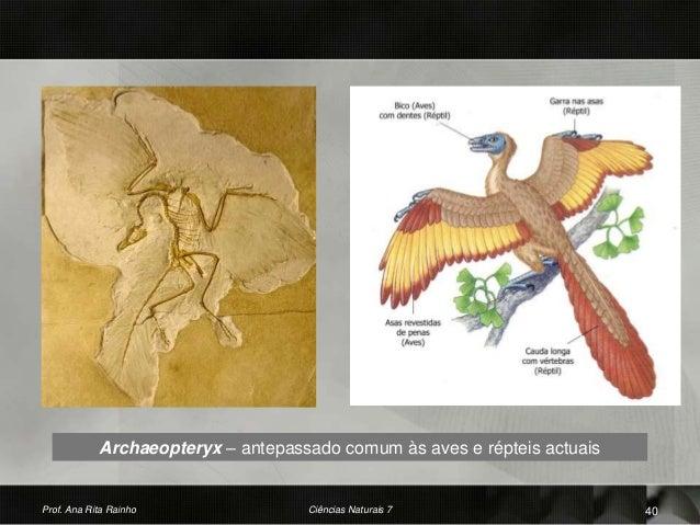 Archaeopteryx – antepassado comum às aves e répteis actuais Prof. Ana Rita Rainho 40Ciências Naturais 7