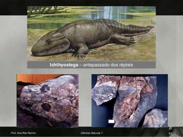 Ichthyostega – antepassado dos répteis Prof. Ana Rita Rainho 42Ciências Naturais 7