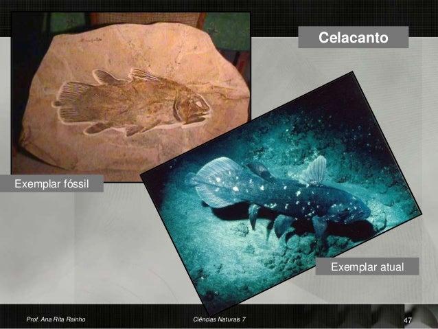 Celacanto Exemplar atual Exemplar fóssil Prof. Ana Rita Rainho 47Ciências Naturais 7