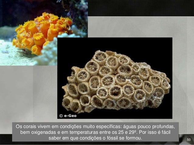 Os corais vivem em condições muito específicas: águas pouco profundas, bem oxigenadas e em temperaturas entre os 25 e 29º....