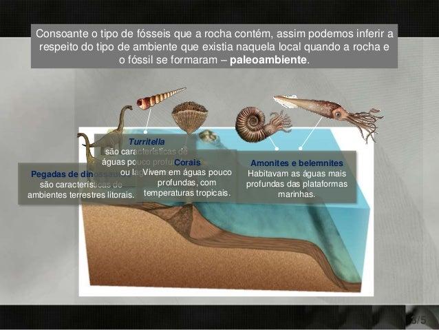 3/5 Pegadas de dinossauros são características de ambientes terrestres litorais. Turritella são características de águas p...