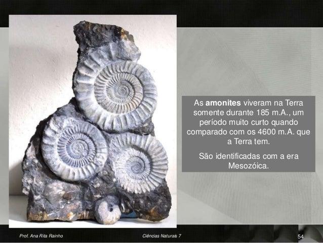 As amonites viveram na Terra somente durante 185 m.A., um período muito curto quando comparado com os 4600 m.A. que a Terr...