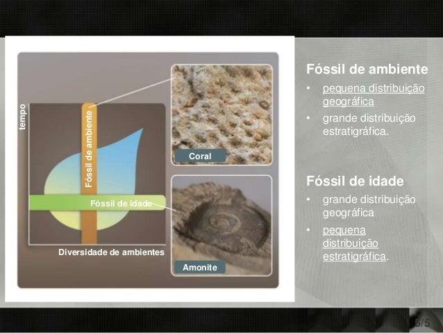 Fóssil de ambiente • pequena distribuição geográfica • grande distribuição estratigráfica. Fóssil de idade • grande distri...