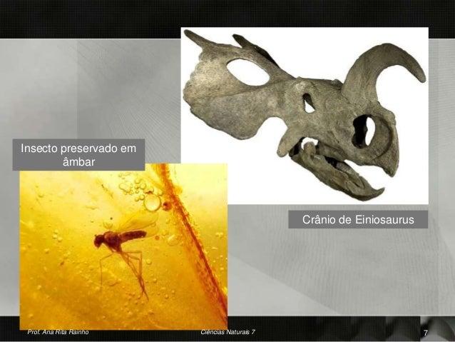 Insecto preservado em âmbar Crânio de Einiosaurus Prof. Ana Rita Rainho 7Ciências Naturais 7