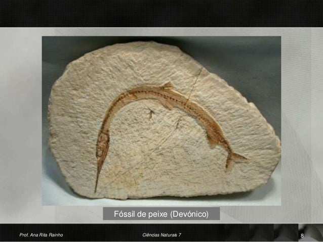 Fóssil de peixe (Devónico) Prof. Ana Rita Rainho 8Ciências Naturais 7