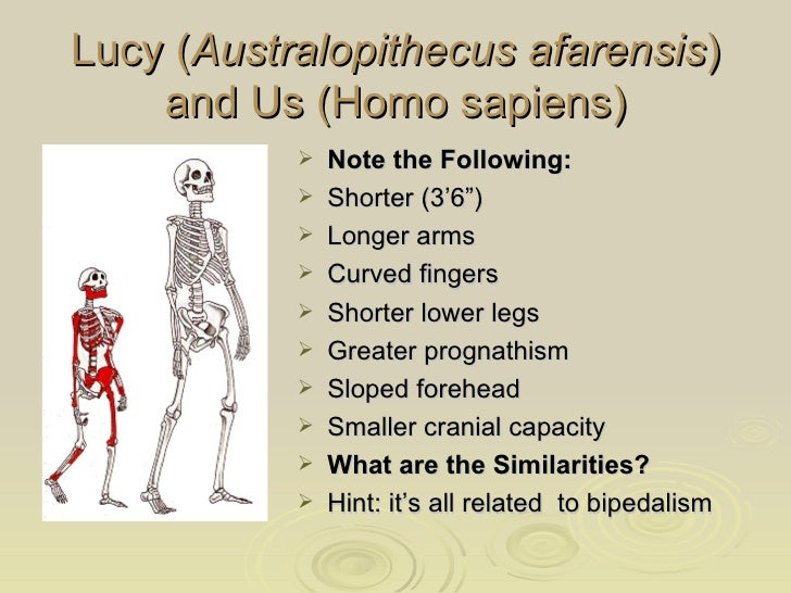 Role of bipedalism in homo sapiens