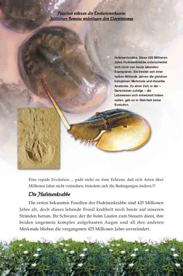 Beste Vergleichende Anatomie Evolution Bilder - Anatomie Ideen ...