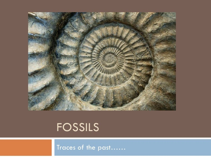 FOSSILS Traces of the past……