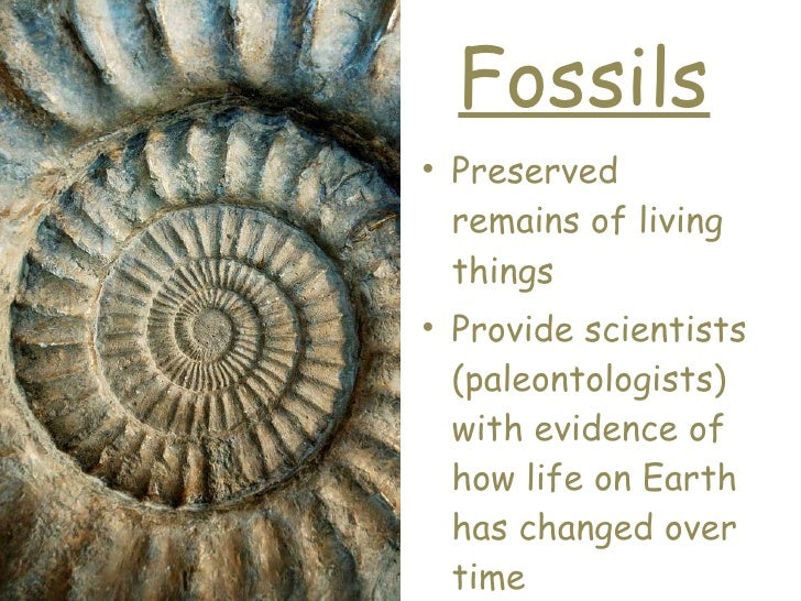 Fossils <ul><li>Preserved remains of living things </li></ul><ul><li>Provide scientists (paleontologists)  with evidence o...