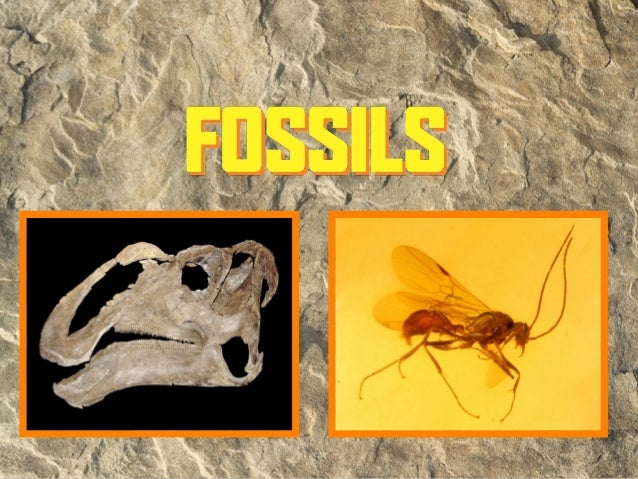 What is a fossil?• A fossil is the preserved remains of a once-  living organism (at least 10,000 yrs. old).• Latin: fossi...