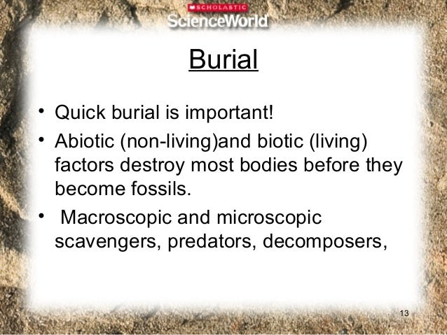 Which Organisms Become  Part of the Fossil Record?• Soft Body Parts: skin, muscle• Hard Body Parts: bone, teeth, shells,  ...