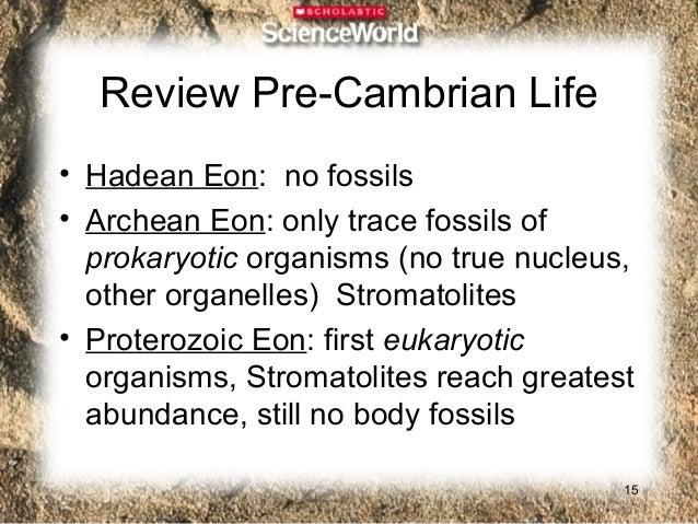 Inorganic vs. Organic• Inorganic exoskeletons very resistant to  destruction• Calcium• Some inorganic exoskeletons  connec...