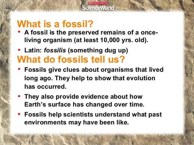 The Fossil RecordAll of the fossils that exist are part of theFossil Record•Includes fossils that have yet to bediscovered...