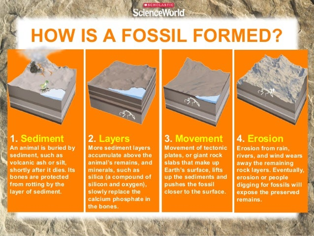 FIVE MAIN TYPES OF FOSSILS Petrified             Molds and               Carbon Fossils                Casts              ...