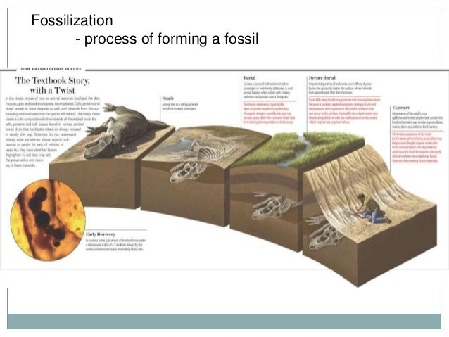 the process of fossilization and how to date fossils How fossils are dated excerpt from introduction to fossil absolute dating of fossils requires other dating methods such as the potassium-argon or.