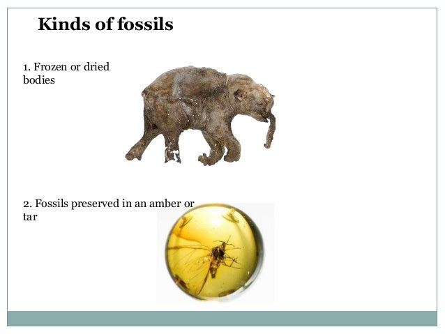 Kinds of fossils 1. Frozen or dried bodies  2. Fossils preserved in an amber or tar