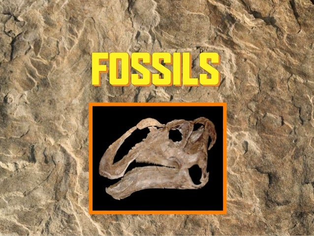Fossils: Uses Of Fossils