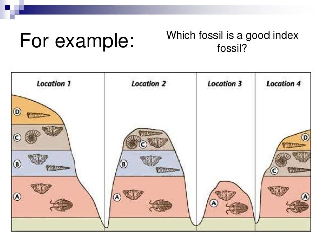 Index fossils and relative dating