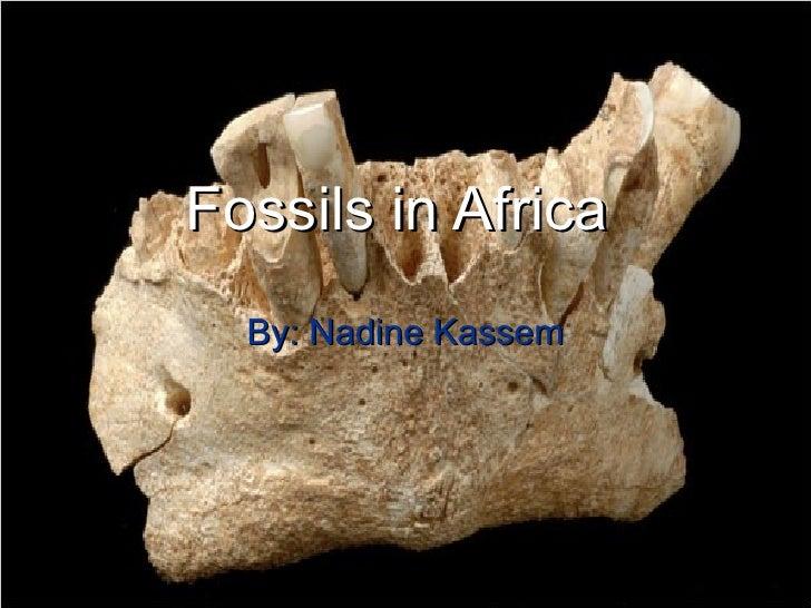 Fossils in Africa   By: Nadine Kassem