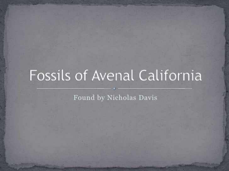 Found by Nicholas Davis<br />Fossils of Avenal California<br />