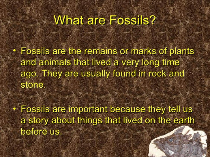 Fossils Ppt on Parts Of A Seed Worksheet