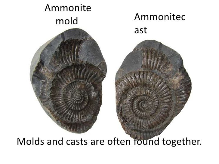 Ammonite        mold             Ammonitec                         astMolds and casts are often found together.