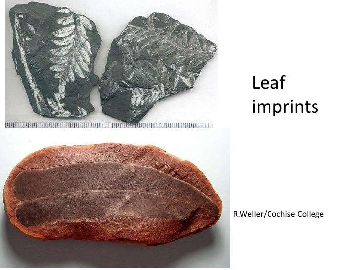 Leaf    imprintsR.Weller/Cochise College