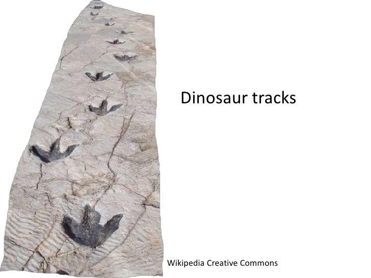 Dinosaur tracksWikipedia Creative Commons