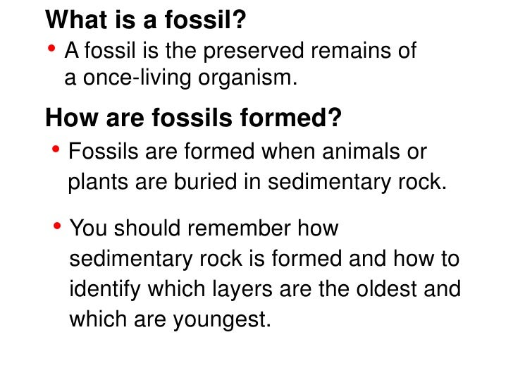 Fossils teach – Types of Fossils Worksheet
