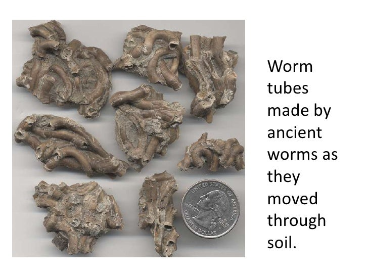 Wormtubesmade byancientworms astheymovedthroughsoil.