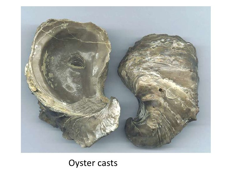 Oyster casts