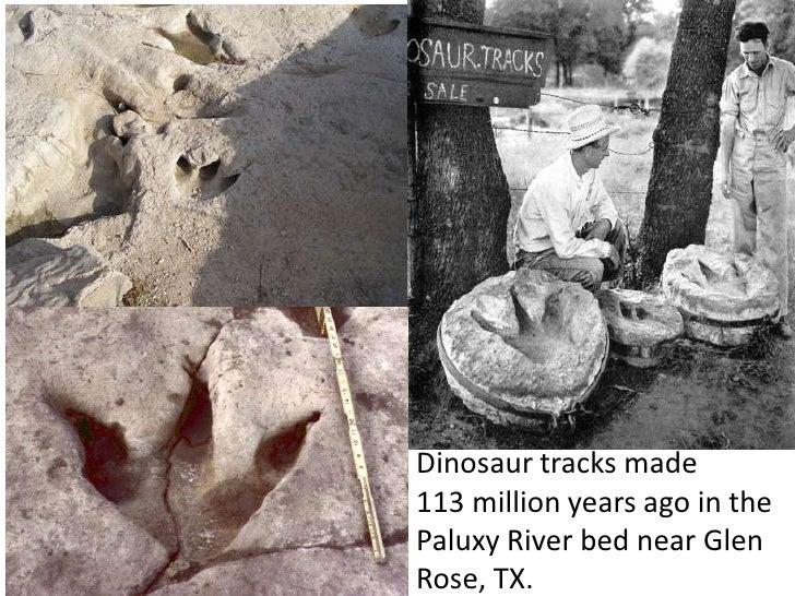 Dinosaur tracks made113 million years ago in thePaluxy River bed near GlenRose, TX.