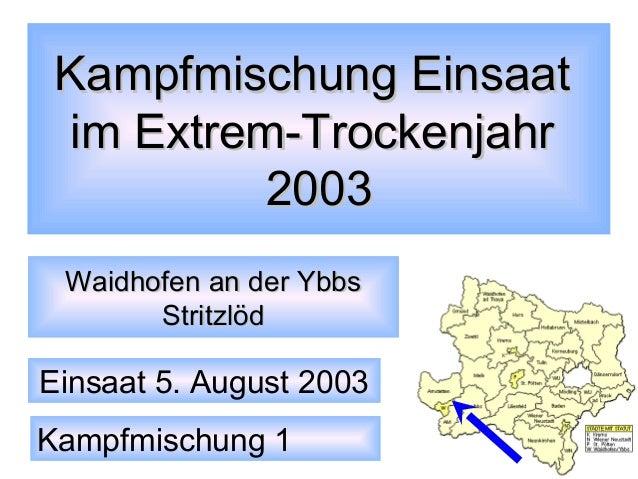 Kampfmischung Einsaat im Extrem-Trockenjahr 2003 Waidhofen an der Ybbs Stritzlöd  Einsaat 5. August 2003 Kampfmischung 1